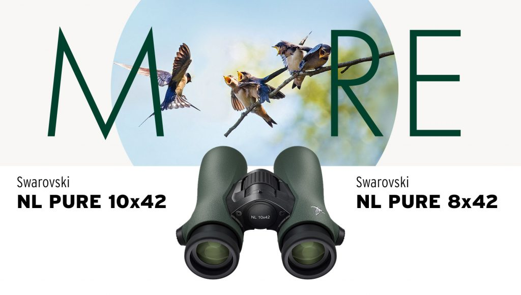 (Swarovski NL PURE 10x42 und Swarovski NL PURE 8x42)